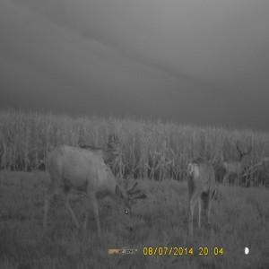Mule Buck Jamberee