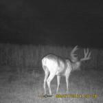 Northeastern Colorado Mule Deer Scouting