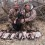 3 Man Mallard Limit South Platte River CRUSH