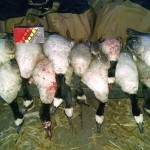 Northeastern Co Goose Crush BeausOutdoors