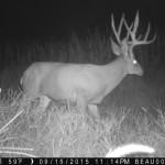 Northeastern Colorado Mule Deer
